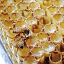 Royal gel, straight from the hive